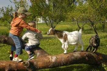 Klettergerüst Ziegen : Ferienhof otto gäng